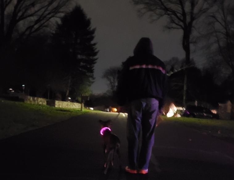 Dog walking at night